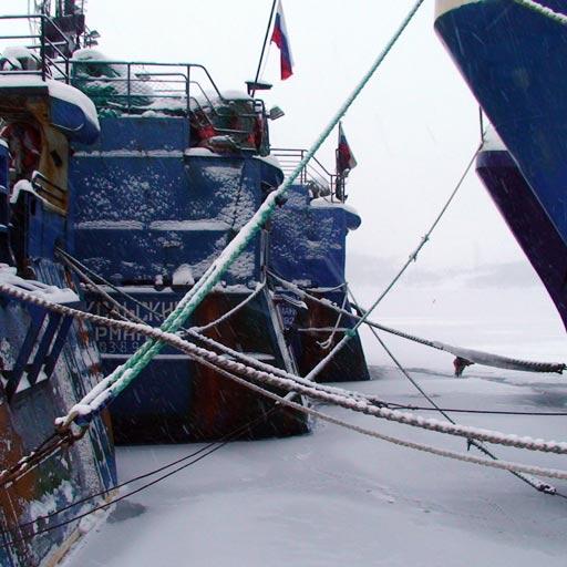 Arctic Tactic